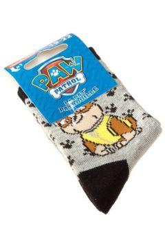 Chaussettes enfant Pat Patrouille Chaussettes Niveau mollet - Coton - Paw Patrol Nickelodeon(115630422)