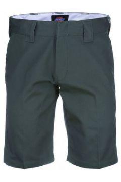 Short Dickies Tynan(127892840)